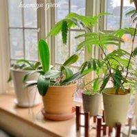 観葉植物と鉢の選び方!種類や大きさで相性が違う?号ってなに?の画像