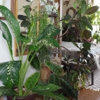 観葉植物とインテリアのおしゃれな飾り方とは?おすすめ20選の画像