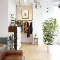 おうちを癒やしの空間に!置き場所別・おすすめの観葉植物の画像