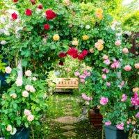 イングリッシュガーデンとは|自宅での作り方やおすすめの植物は?の画像