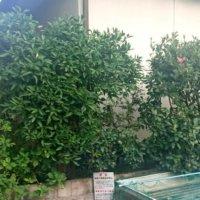 庭木として人気の低木|代表的な種類や目隠しなどの役割は?の画像