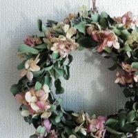 ユーカリの種類|シンボルツリーや切り花に人気の厳選4品種!の画像