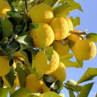 冬の果物といえば?植え付けや収穫の時期は?の画像