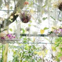 世界のランが咲く、高知県立牧野植物園の温室を3Dで見てみよう!の画像
