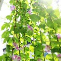 グリーンカーテンの作り方|効果とおすすめの植物7選の画像