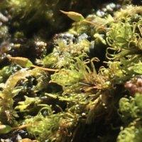 苔(コケ)の種類|苔庭・苔玉・苔テラリウムにおすすめの品種は?庭に生えるのは?の画像