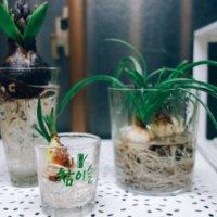 水耕栽培の肥料|与え方や時期、効果や注意点は?の画像