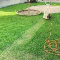 芝生の庭は種まきで簡単につくれる!の画像