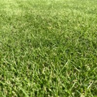 芝生の肥料|時期や頻度、効果やおすすめの選び方は?の画像