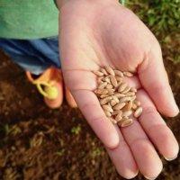 家庭菜園は有機の種で!健康にも環境にも優しい栽培を楽しもう♫Organic Seedsの画像