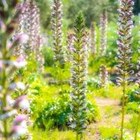 アカンサスの花言葉|歴史ある葉?種類や品種、花の特徴は?の画像