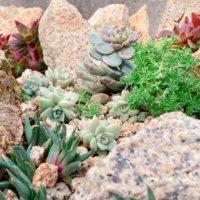 おしゃれなロックガーデンの作り方|石の積み方、おすすめの植物は?の画像