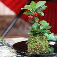 ケト土とは|特徴や使い方、盆栽、苔玉、ビオトープにおすすめ?の画像