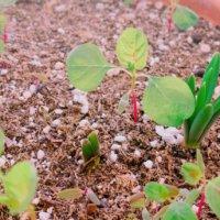 種まきの基本|種をまく時期は?土はなにを使う?発芽率を上げるコツは?の画像