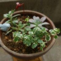 観葉植物の寄せ植えの基本|おすすめのレイアウトは?大型品種もOK?の画像