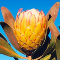 ワイルドフラワーとは|代表的な花の種類は?ミックスシードってなに?の画像