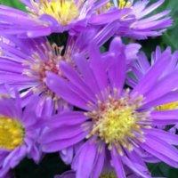 健康の意味を持つ花言葉|敬老の日の贈り物にもぴったり!の画像