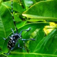カミキリムシの駆除・対策|幼虫の被害は?天敵はなに?の画像