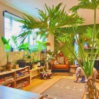 大きな観葉植物をリビングに飾ろう!どんな部屋にどんなグリーンを合わせる?の画像