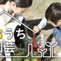 2020年の「おうち園芸」を振り返ろう!おうちで楽しめる面白コンテンツまとめの画像