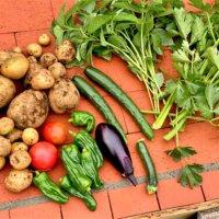 夏野菜10種の栽培カレンダー|土作りや育て方の基本は?種まき時期はいつ?の画像