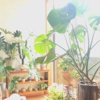 初めてでもわかる!観葉植物の植え替えの時期や方法、失敗しないコツ!の画像