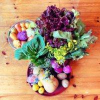 秋野菜の栽培|種まきや植え付けはいつ?旬に食べたい10種類の画像