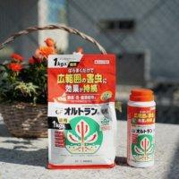 害虫防除は「オルトラン粒剤」におまかせ!超ロングセラーの人気の理由に迫ります👀の画像