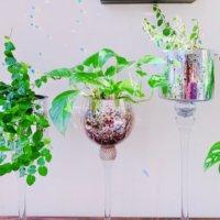 ポトスの水栽培(水耕栽培)|カビを防ぐには?水替え頻度は?の画像