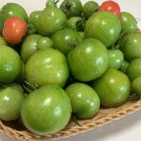 トマトをベランダで育てよう!プランター栽培のコツは?置き場所はどうすべき?の画像