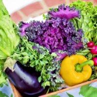 病気や害虫対策に迷ったらコレ!野菜や花にも使える食酢100%の殺虫殺菌剤とは?の画像