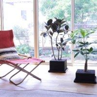 軽くて割れない&清潔!リサイクル素材「NPORUS®︎」で観葉植物を育てよう♫の画像