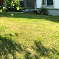 芝生の除草剤|芝生は枯れない?液剤と粒剤の違いは?雑草によって変えるべき?の画像