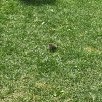 芝生の種類|お手入れ不要で管理が楽なのは?おすすめ10選!の画像