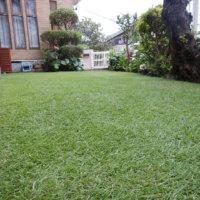 芝生に生える雑草の種類|対策方法は?クローバーの抜き方は?の画像