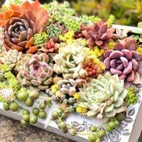 多肉植物にはどんな鉢がおすすめ?テラコッタやモスポットなどの種類は?の画像