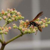 ヤブカラシとは|花の特徴や食べ方、駆除は除草剤がおすすめ?の画像