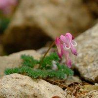 絶滅危惧種もたくさん!六甲高山植物園の希少な花々を見てみようの画像