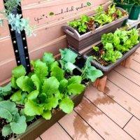 家庭菜園は狭いスペースでも楽しめる!ユーザーさんの「小さな畑」特集♪の画像