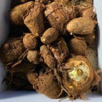 里芋(サトイモ)の栄養・効果|冷凍での保存方法や旬の時期、選び方は?の画像