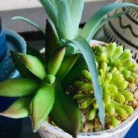 本物の観葉植物みたいなフェイクグリーンとは?風水効果や飾り方は?の画像
