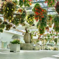 新感覚フラワーパーク「HANA・BIYORI」で花とアートを楽しもう♪の画像