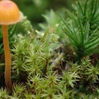 スナゴケの育て方|庭への植え方や増やし方は?茶色く枯れる原因は?の画像