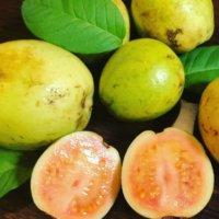 グアバの栄養|効果・効能や旬の時期、選び方や保存方法は?の画像