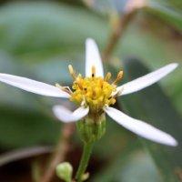 野菊(のぎく)とは|花言葉や季節、種類は?の画像
