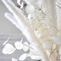 ルナリアとは|花の特徴や花言葉、ドライフラワーの作り方は?の画像