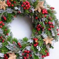 モミの木とは|育て方や花言葉、クリスマスツリーになった由来は?の画像