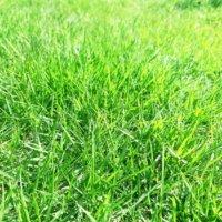 芝生の雑草対策&肥料にはシバキーププラスV!モニターさんの歓喜の声まとめの画像