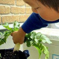 GreenSnap For Kids Project ~2021年7月キッズ便り~の画像