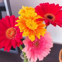 ガーベラの種類|ピンクやオレンジなど色別や咲き方別の品種は?の画像